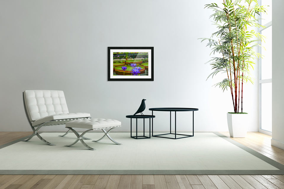 Purple water lily in a pond in Custom Picture Frame