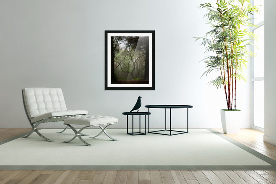 Clearing in the Woods in Custom Picture Frame
