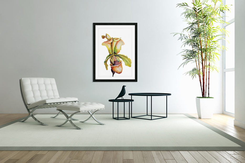 Blooming Paphiopedilum Orchids in Custom Picture Frame
