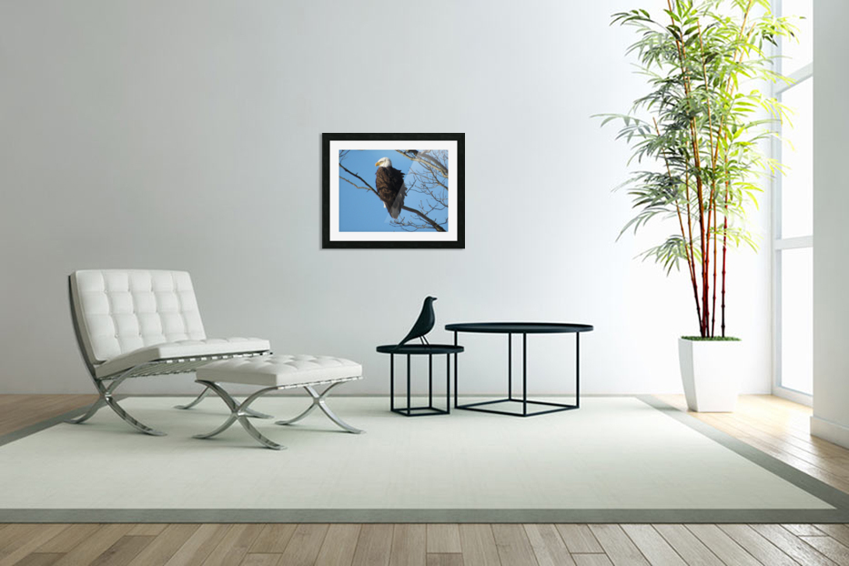 Bald Eagle Sitting on a Branch in Custom Picture Frame