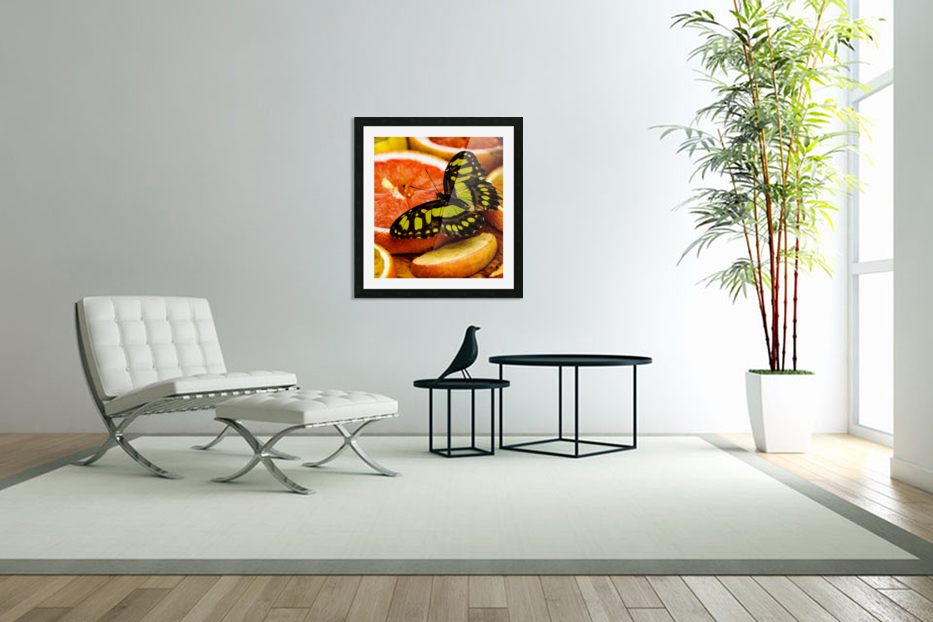 Butterfly And Oranges in Custom Picture Frame