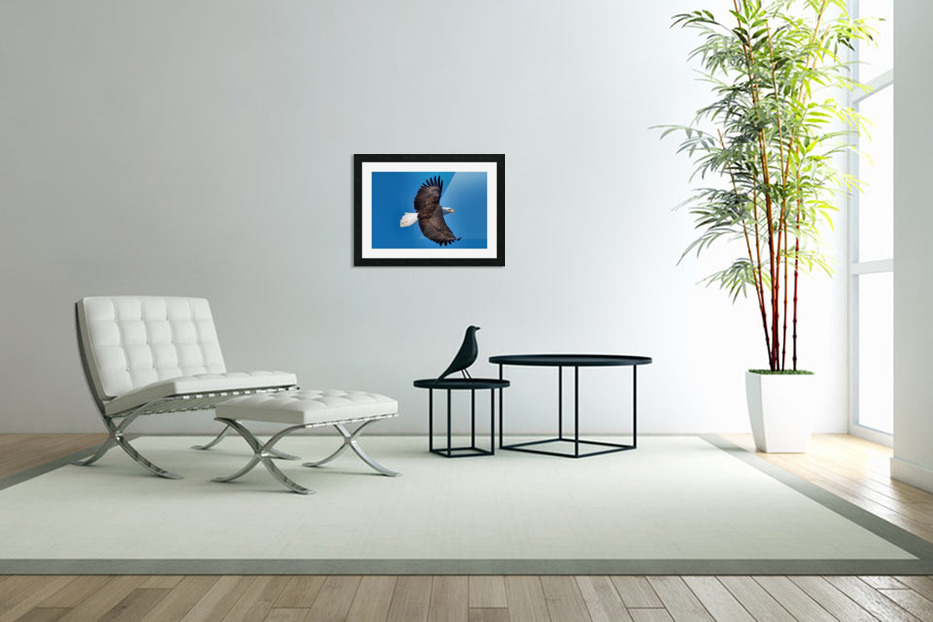 American Bald Eagle in Custom Picture Frame