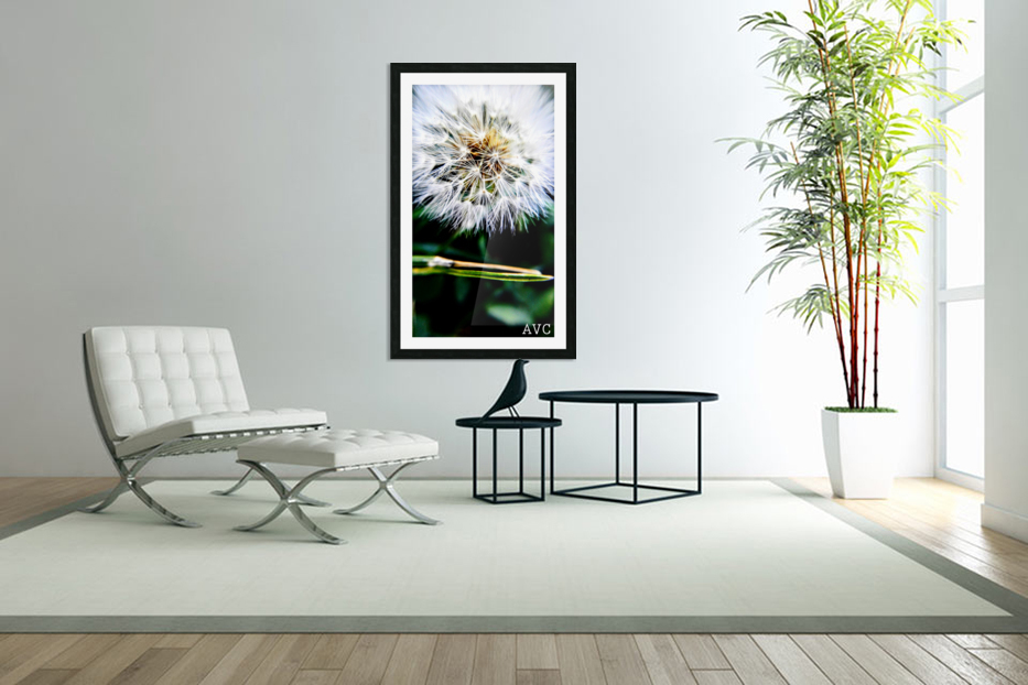 Dandelion Fluff in Custom Picture Frame