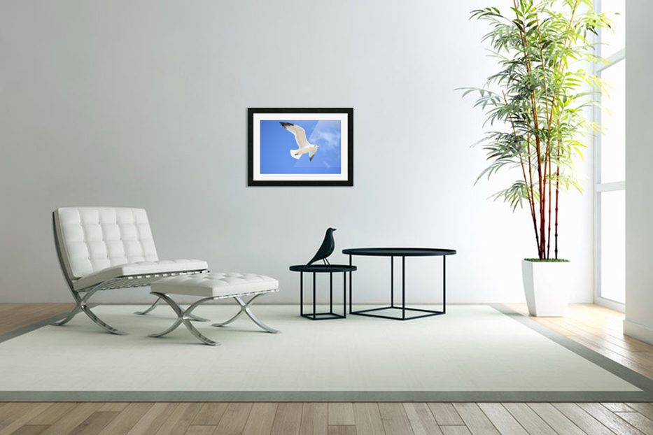 Seagull Overhead in Custom Picture Frame