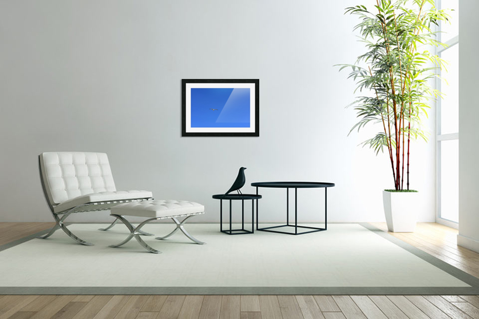 Hovering Seagull in Custom Picture Frame