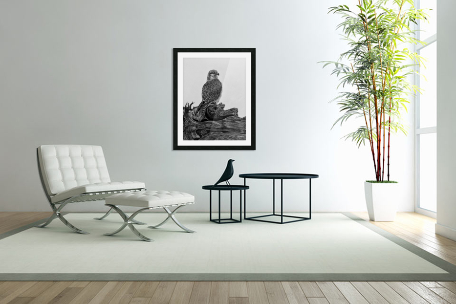 Gyrfalcon in Custom Picture Frame
