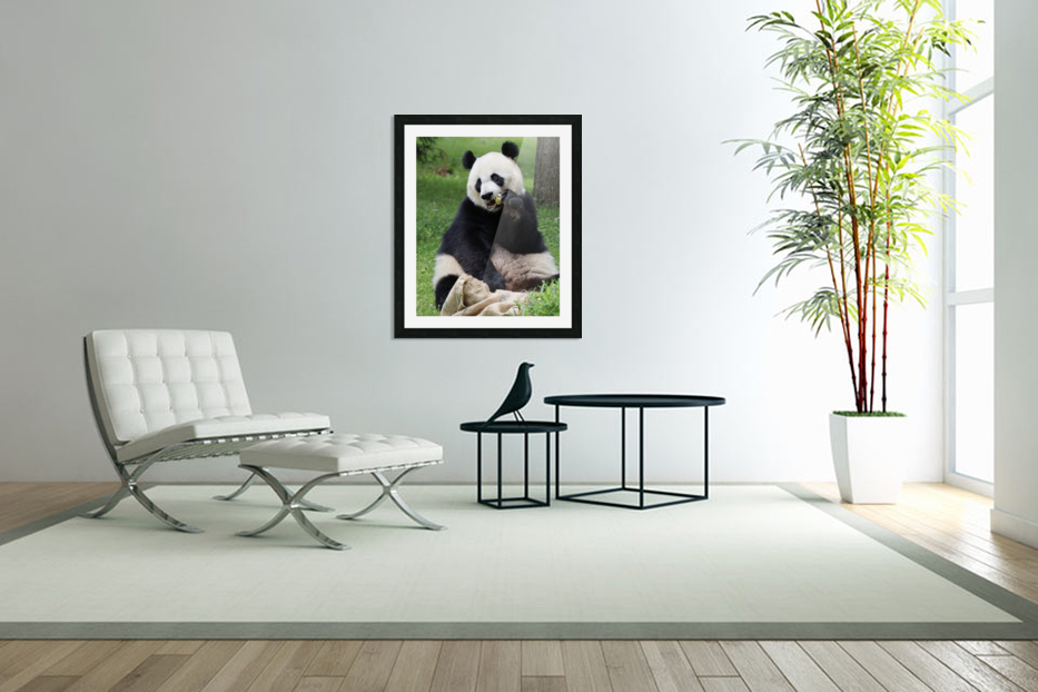 Panda in Custom Picture Frame