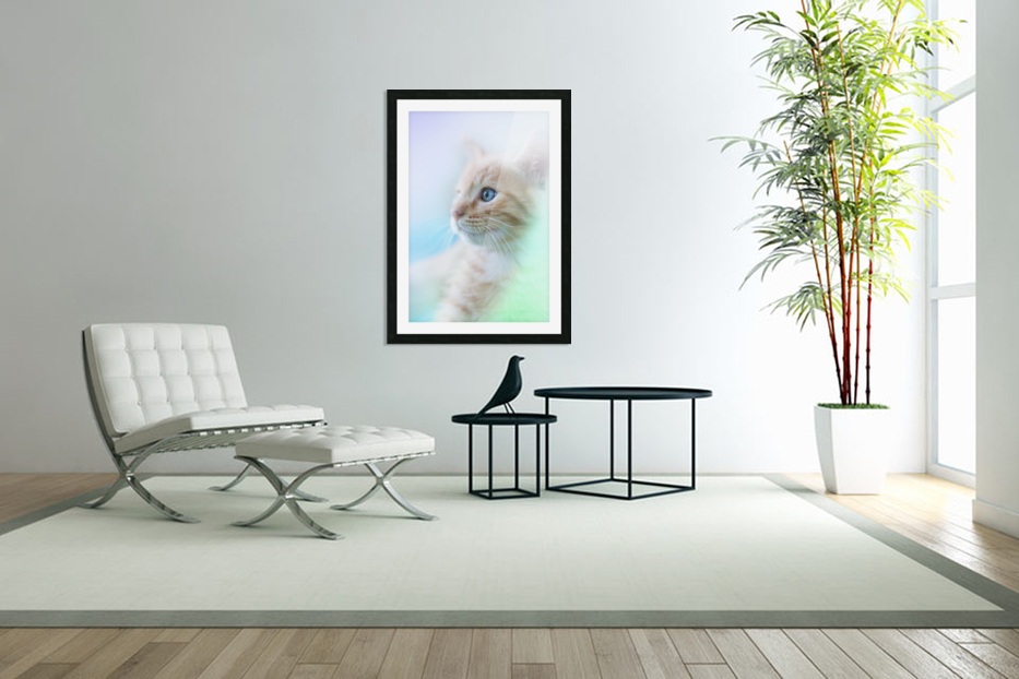 catshadow in Custom Picture Frame