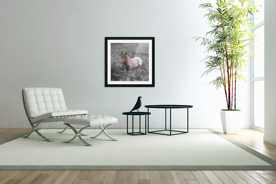 Wild Horses, New Forest in Custom Picture Frame