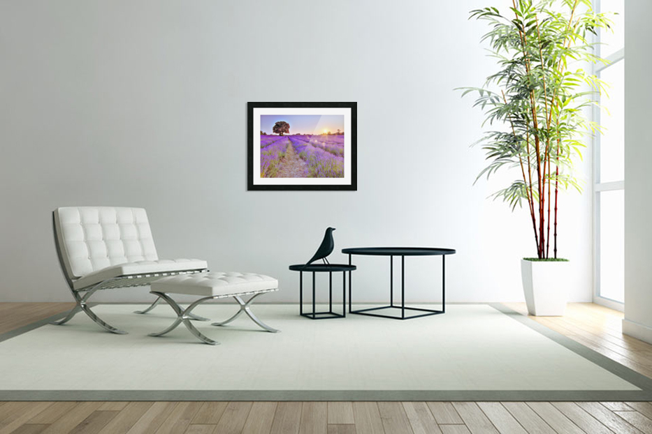 Lavender field at sunset in Custom Picture Frame