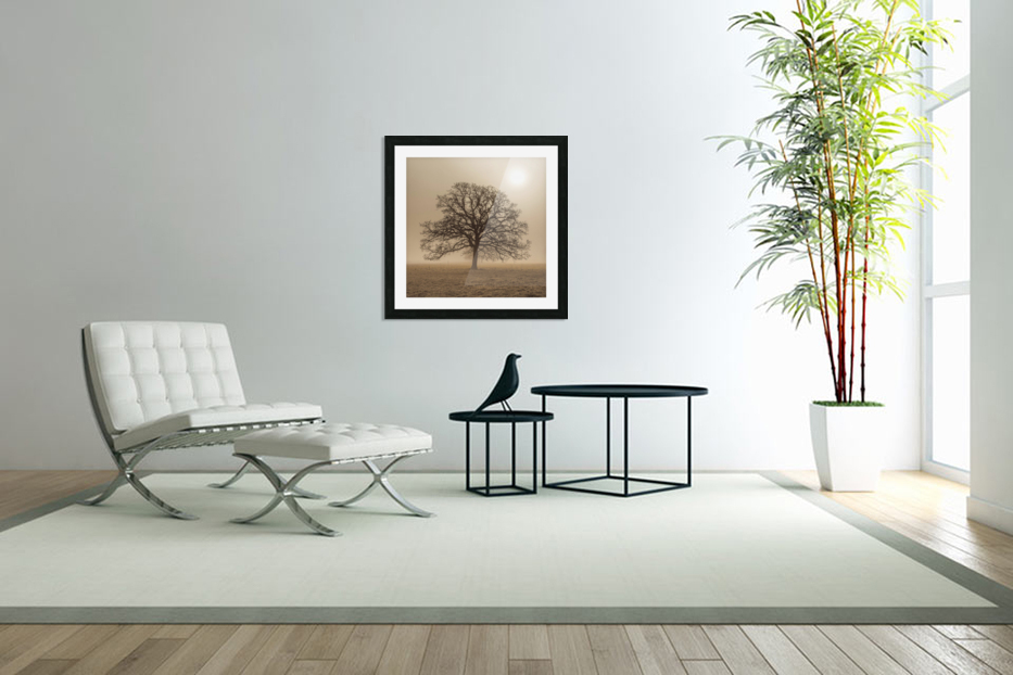 Trees in grass fields in Custom Picture Frame