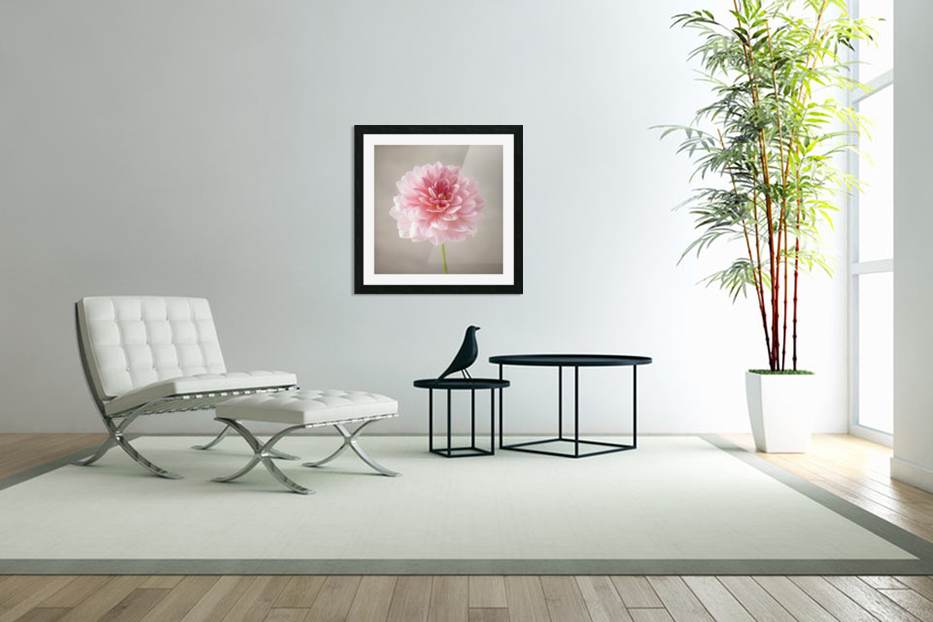 Dahlia flower on colored background in Custom Picture Frame