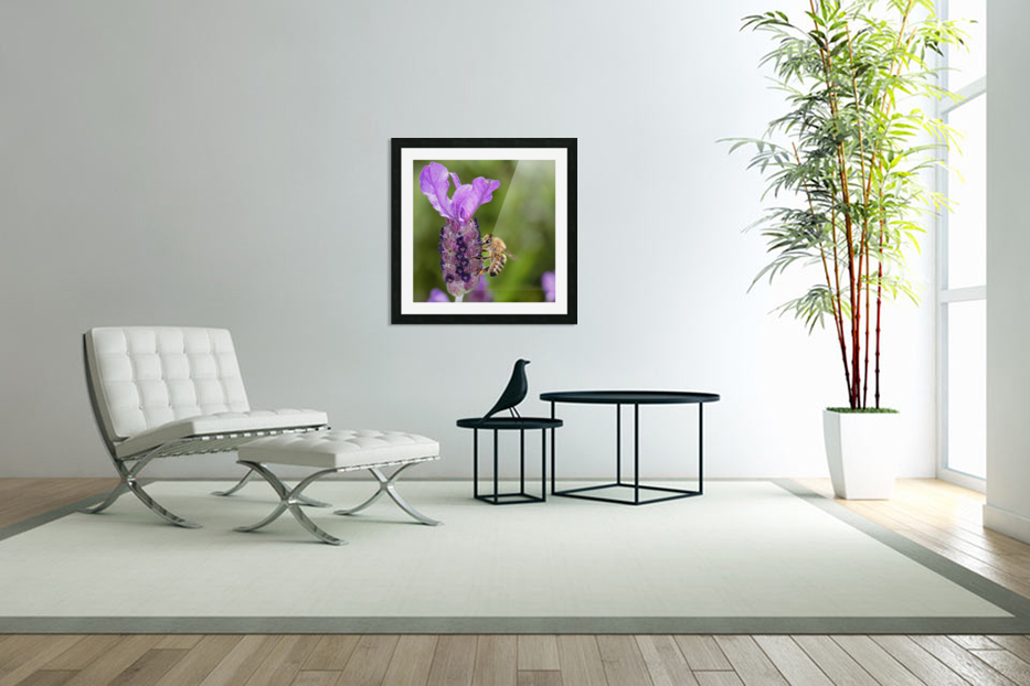 Bee On Lavender in Custom Picture Frame