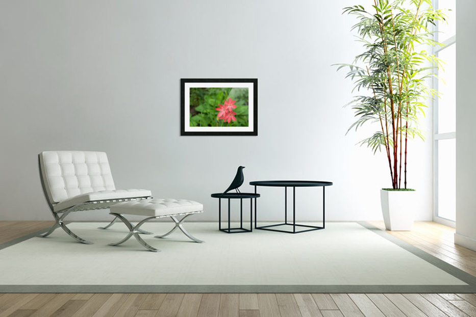 Three Bold Pink River Lily Blooms - Exotic South African Beauties in a Garden in Custom Picture Frame