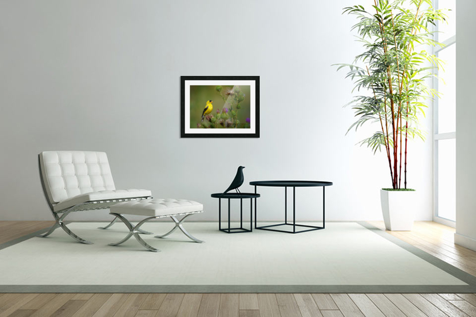 Goldfinch Male in Custom Picture Frame