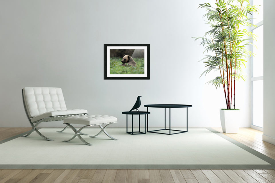 Grizzly Bear in Custom Picture Frame