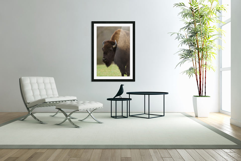 North American Buffalo in Custom Picture Frame