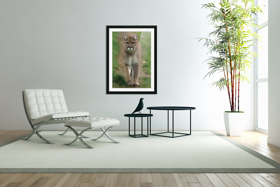 North American Cougar in Custom Picture Frame