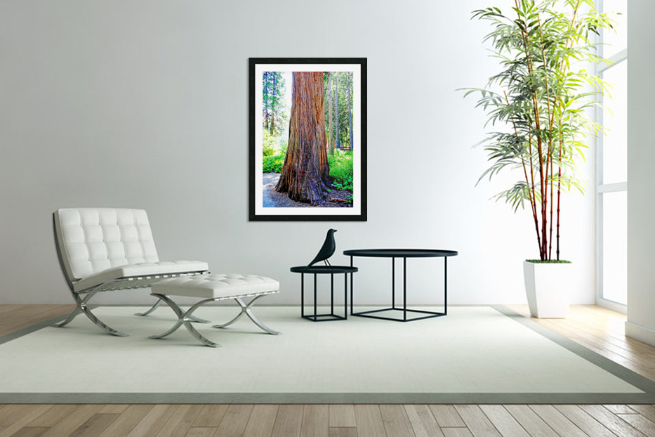 The Tree in Custom Picture Frame