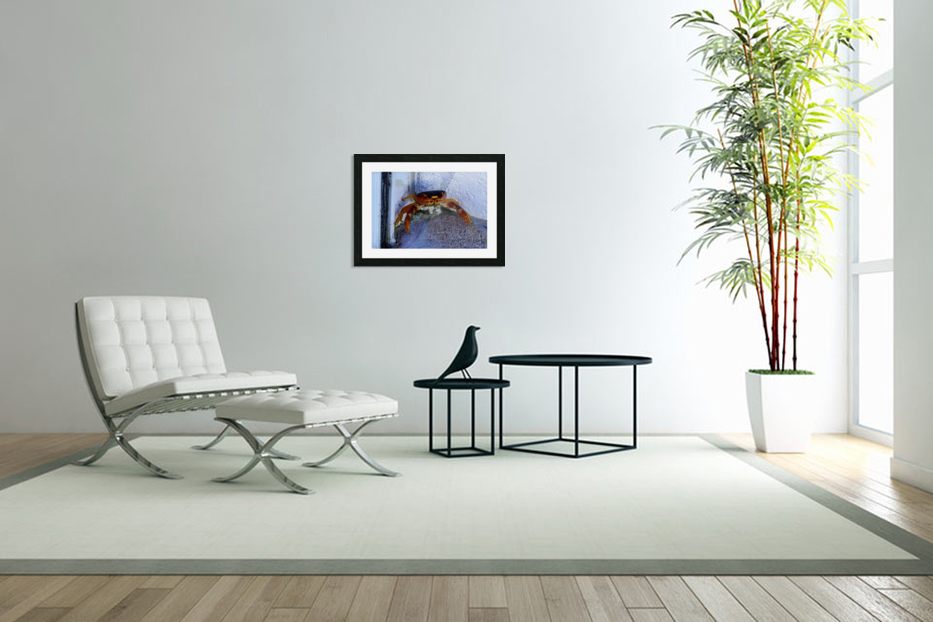 Cayman Cornered Crab in Custom Picture Frame