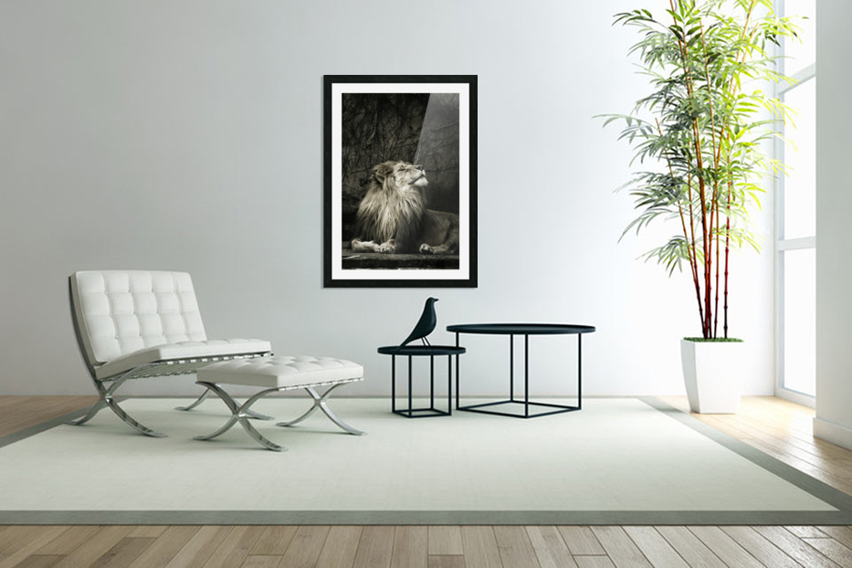 Chill of the Day  Lion  in Custom Picture Frame