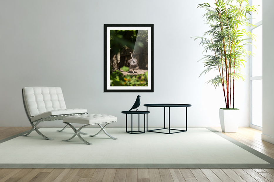 Feathers Fluffed  Ostrich  in Custom Picture Frame