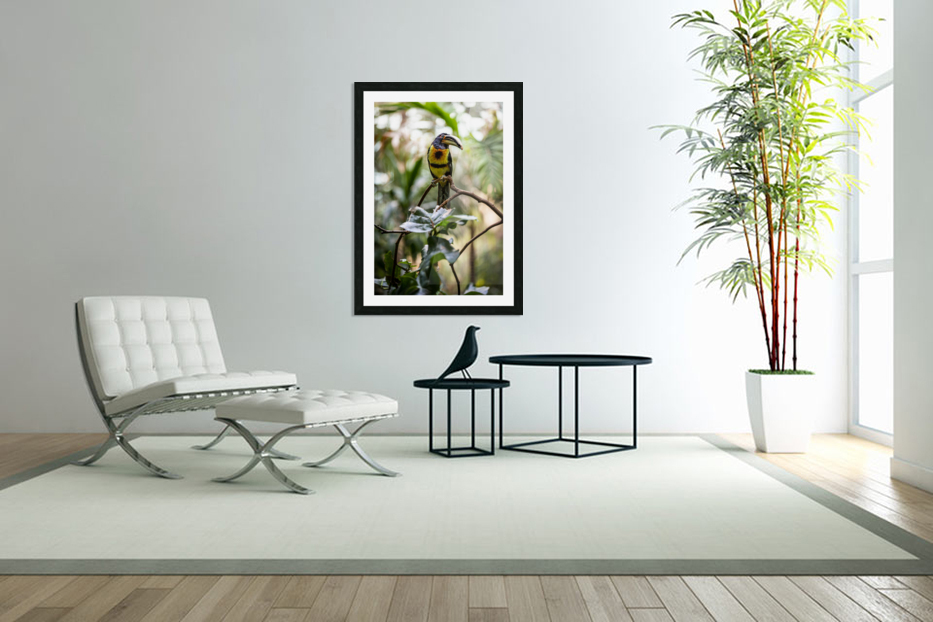 Standing Out  Tucan  in Custom Picture Frame