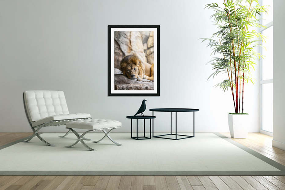 Connection  Lion  in Custom Picture Frame