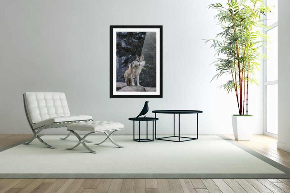 Cold Night Wolf in Custom Picture Frame