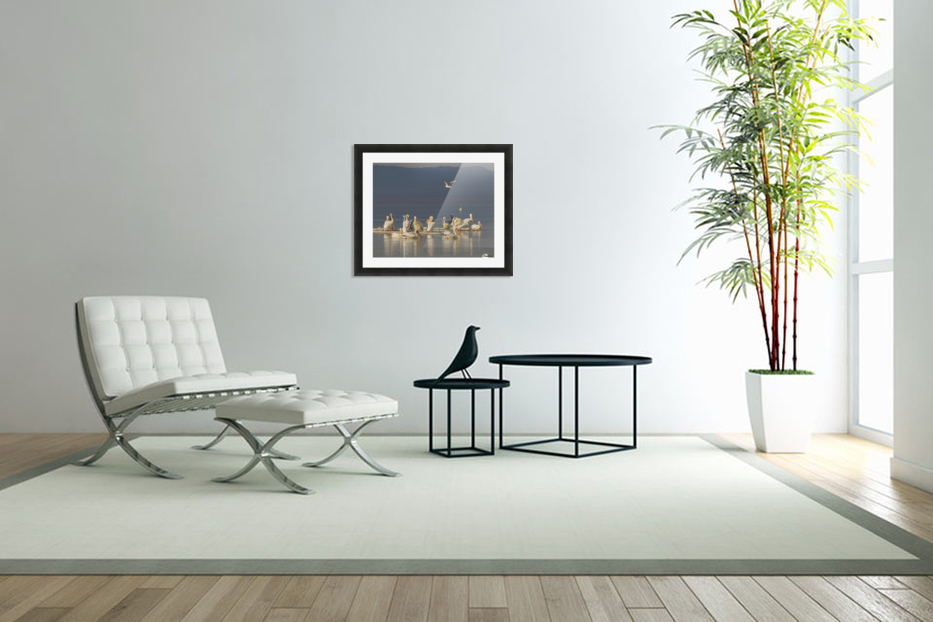Pelicans of the Salton Sea in Custom Picture Frame