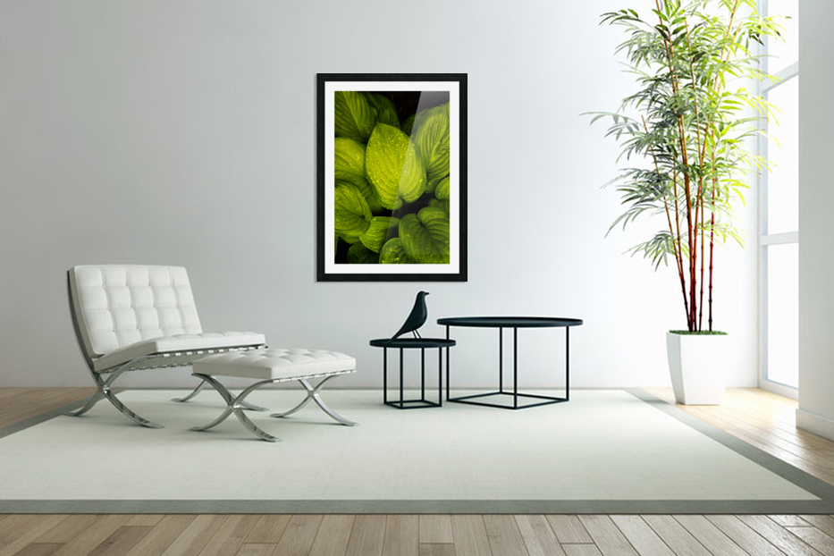 Rain Drops and Hosta Leaves in Custom Picture Frame