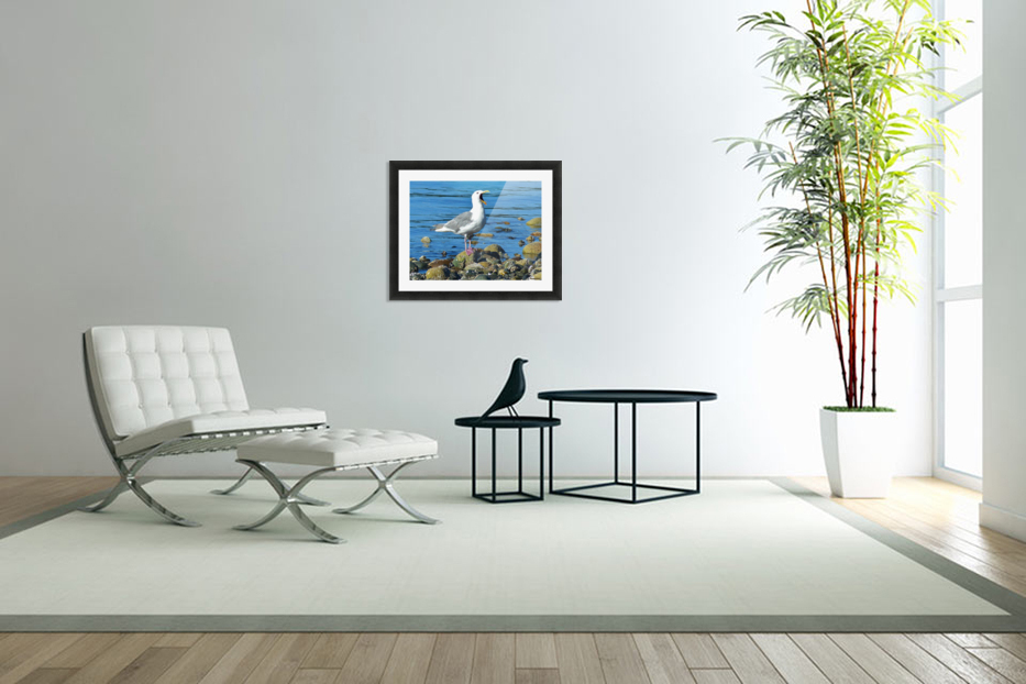 Yawning Gull in Custom Picture Frame