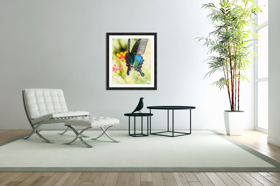 Butterfly not in the sky in Custom Picture Frame