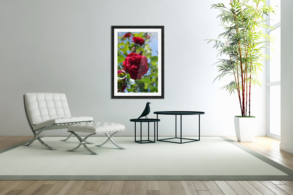 Red, White and Blue in Custom Picture Frame