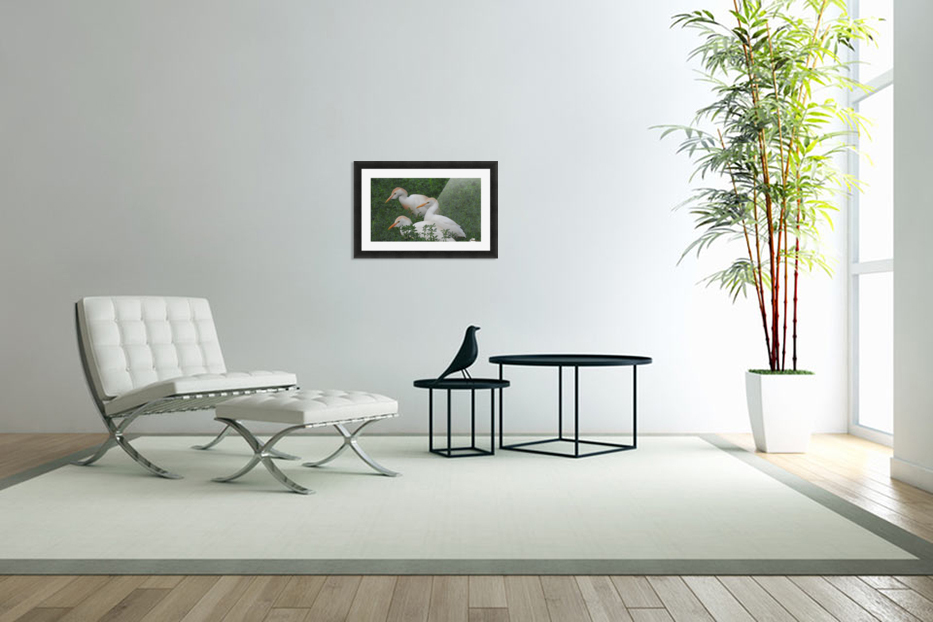 Cattle Egrets in Custom Picture Frame