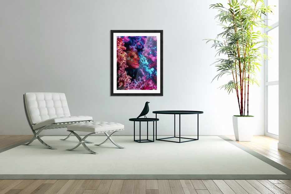 Coral Hind in Custom Picture Frame