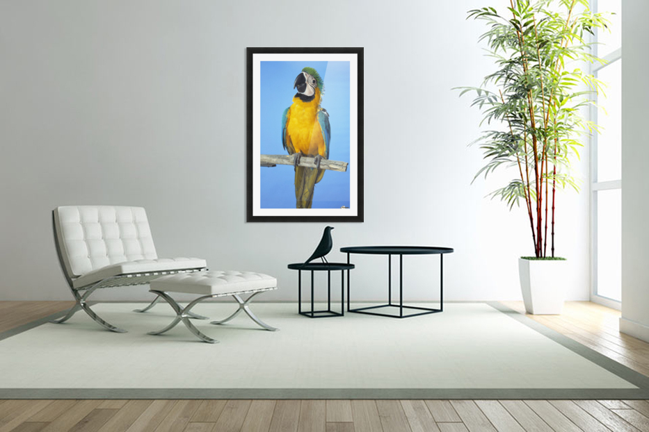 Blue-And-Gold Macaw in Custom Picture Frame