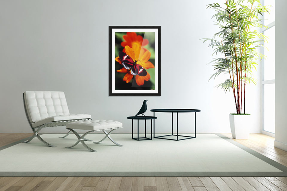 Butterfly On Flower in Custom Picture Frame
