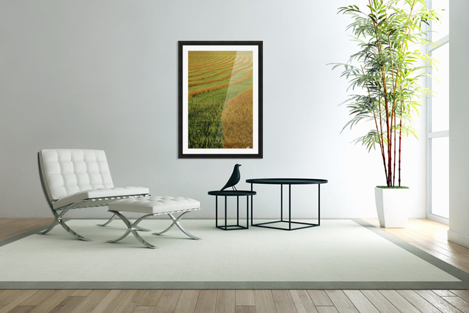Rows Of Canola Windrows in Custom Picture Frame
