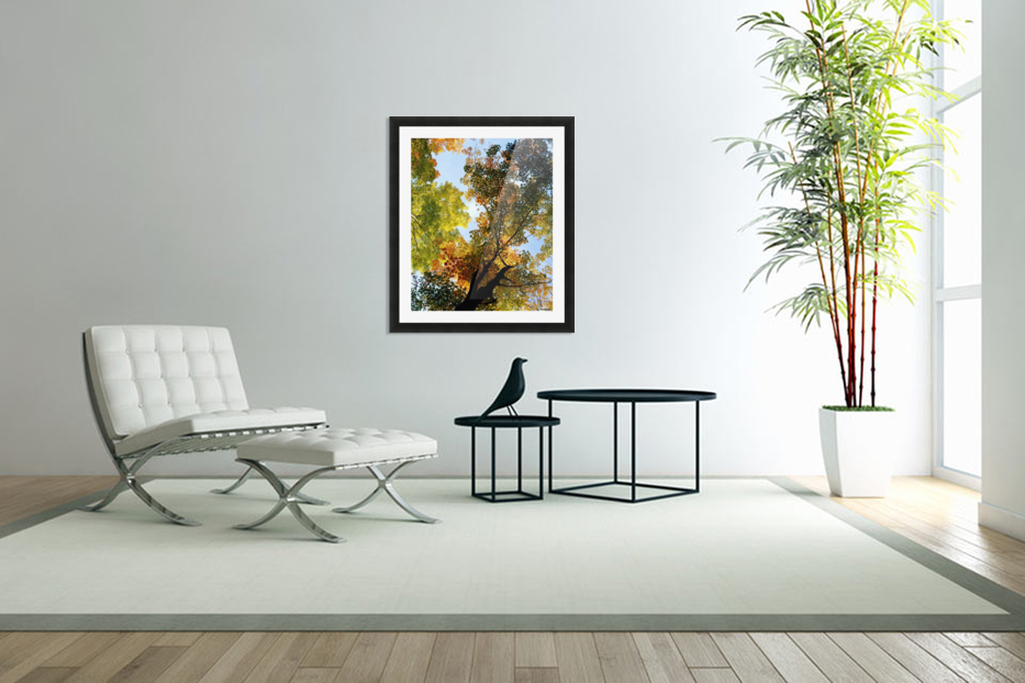 Autumn Trees Low-Angle in Custom Picture Frame