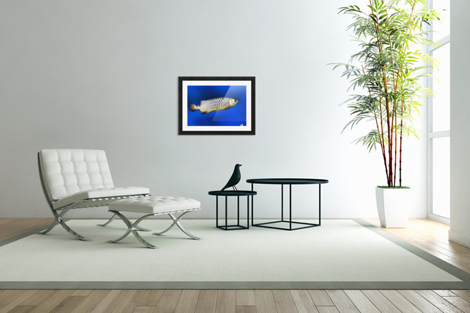 Fish in Custom Picture Frame