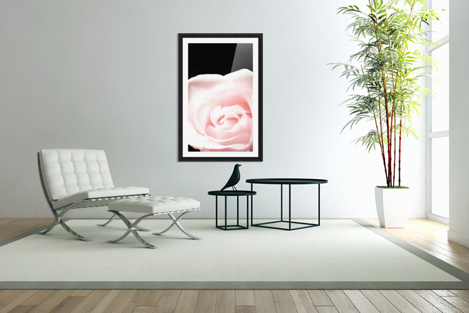 Pink Rose, Close-Up in Custom Picture Frame
