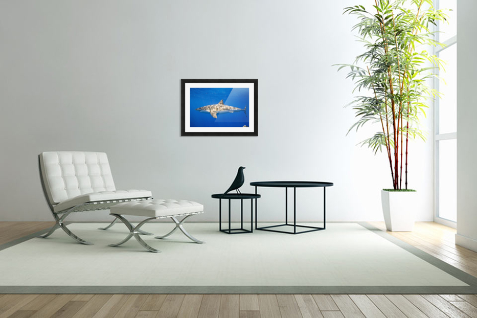 Great White Shark (Carcharodon Carcharias) in Custom Picture Frame