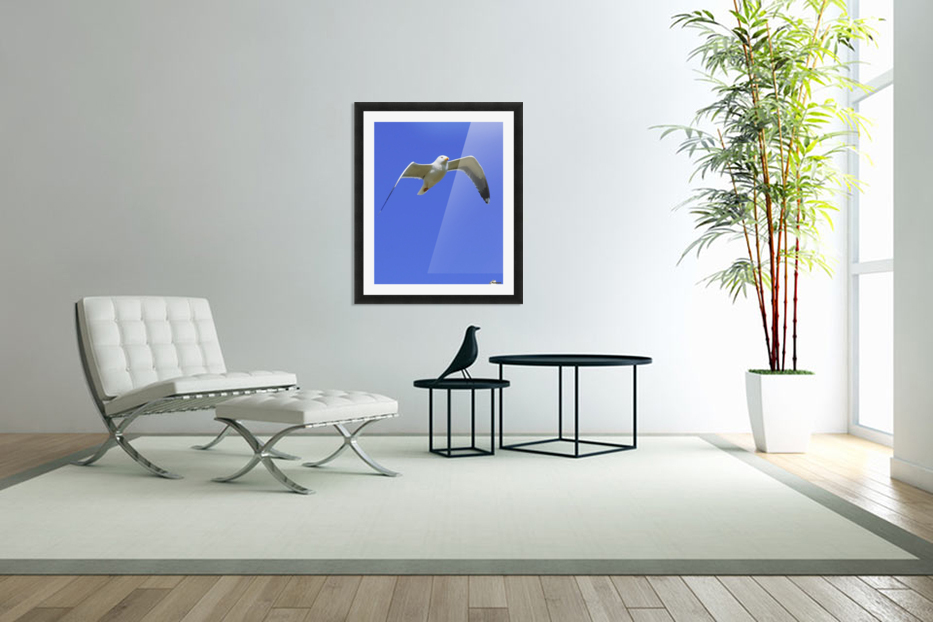 Seagull In Flight in Custom Picture Frame
