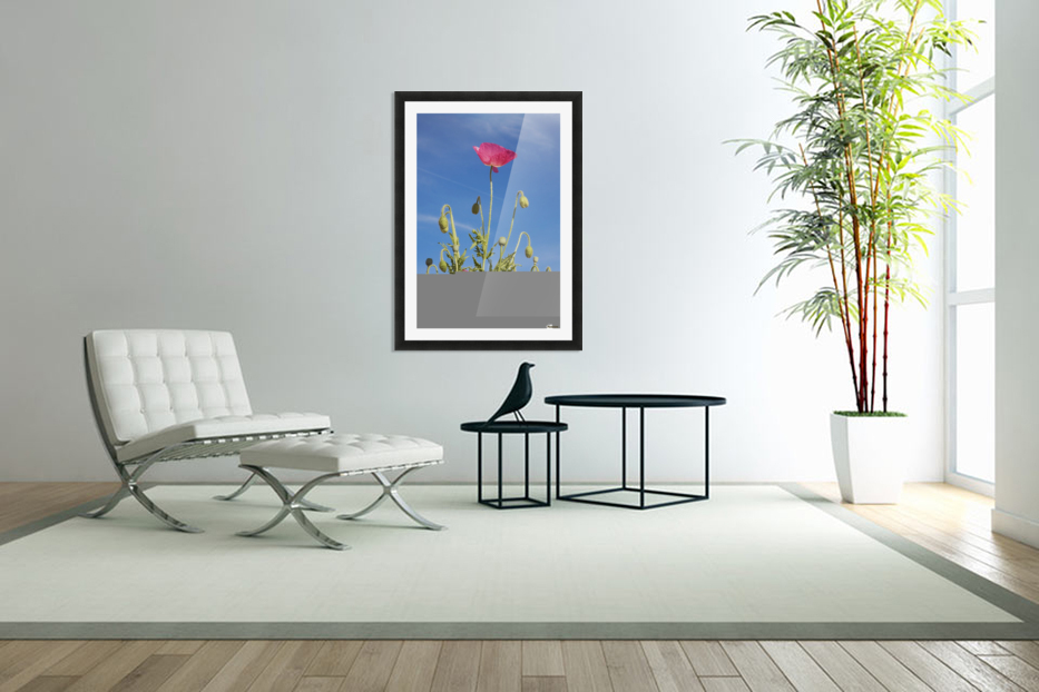 Red Flower Against Blue Sky in Custom Picture Frame
