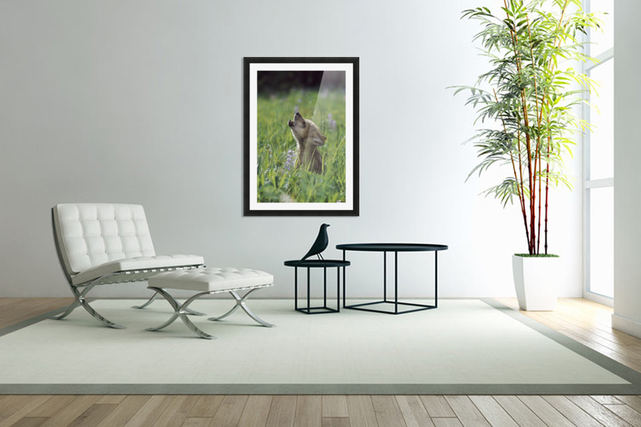 Wolf Puppy Howling In Mountain Meadow in Custom Picture Frame