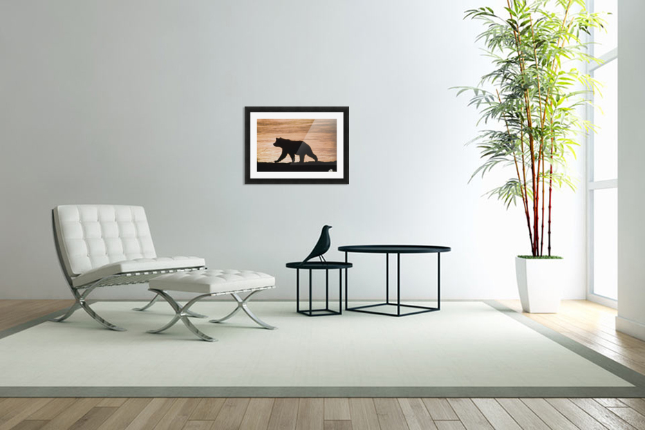 Young Grizzly Bear (Ursus Arctos) Walks Along Edge Of Lake At Sunset in Custom Picture Frame