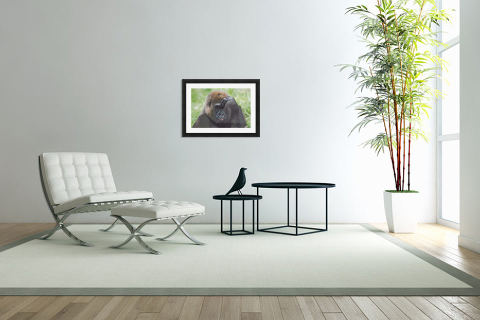 Western Gorilla Portrait With Finger On Brow As If Thinking, Africa in Custom Picture Frame