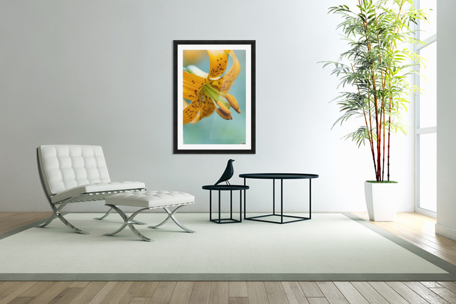 Oregon, United States Of America; A Lily On Mount Hood in Custom Picture Frame