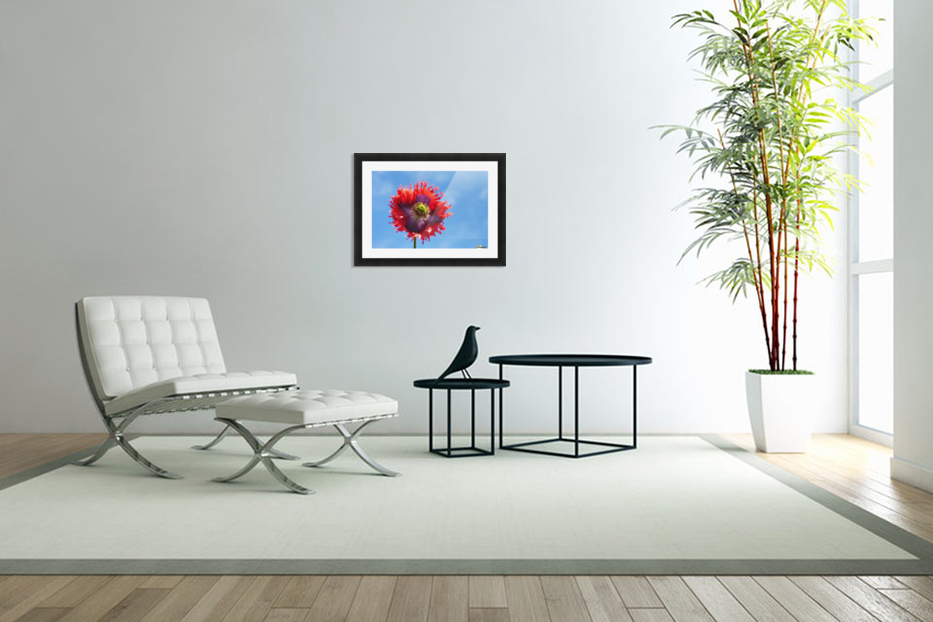 A Colorful Flower With Red And Purple Petals Against A Blue Sky; Northumberland, England in Custom Picture Frame